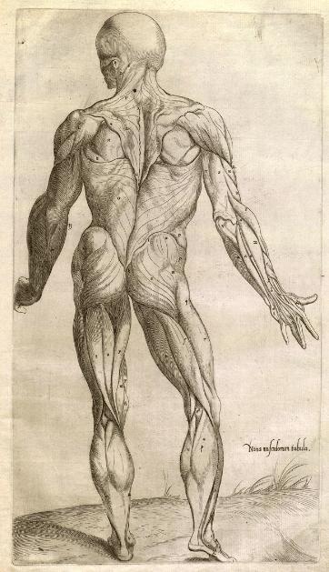 Prima musculorum tabula of Thomas Geminus 1559